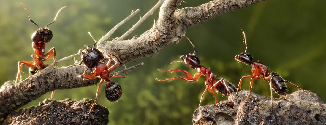 ants-img