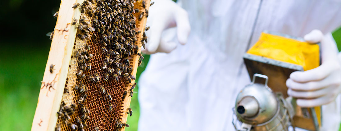 bees-img