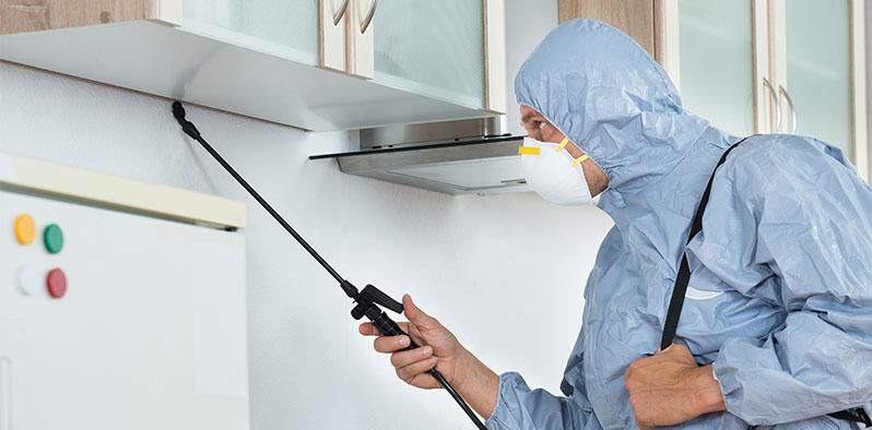 expert-pest-control